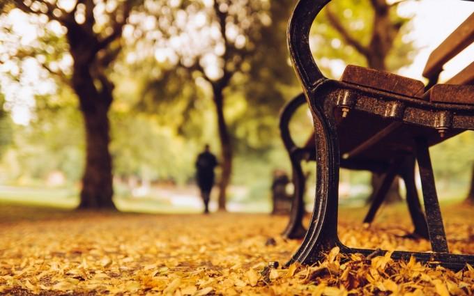 autumn trees park