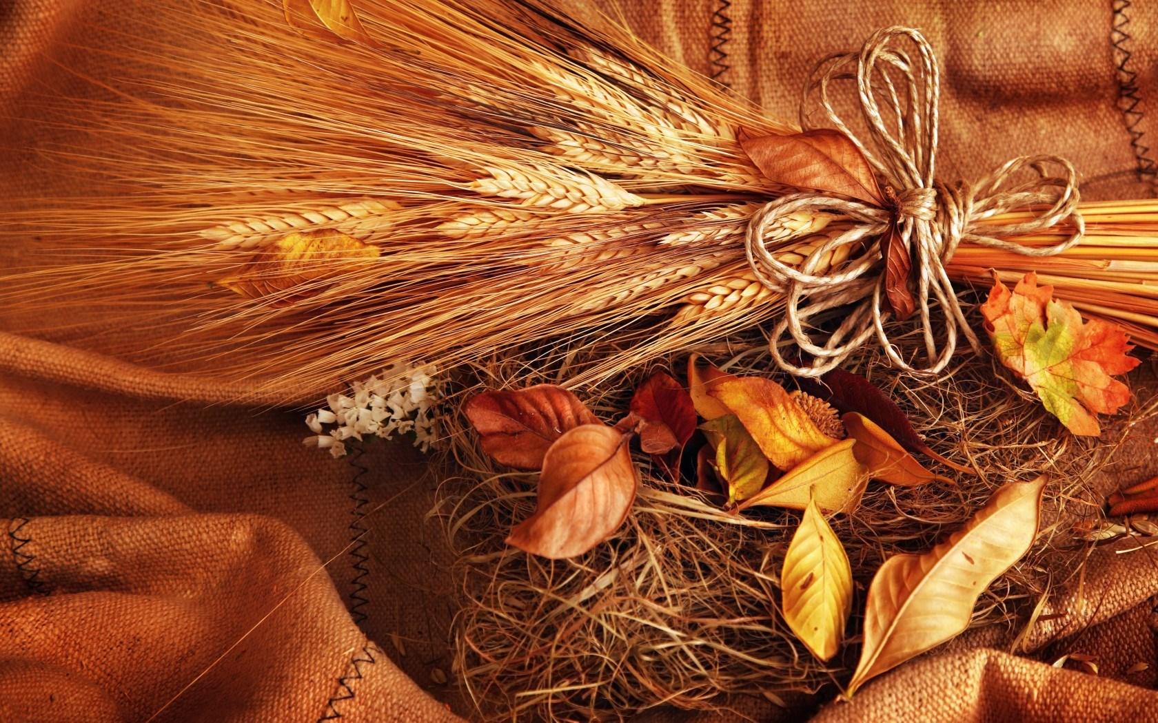 autumn wallpaper abstract