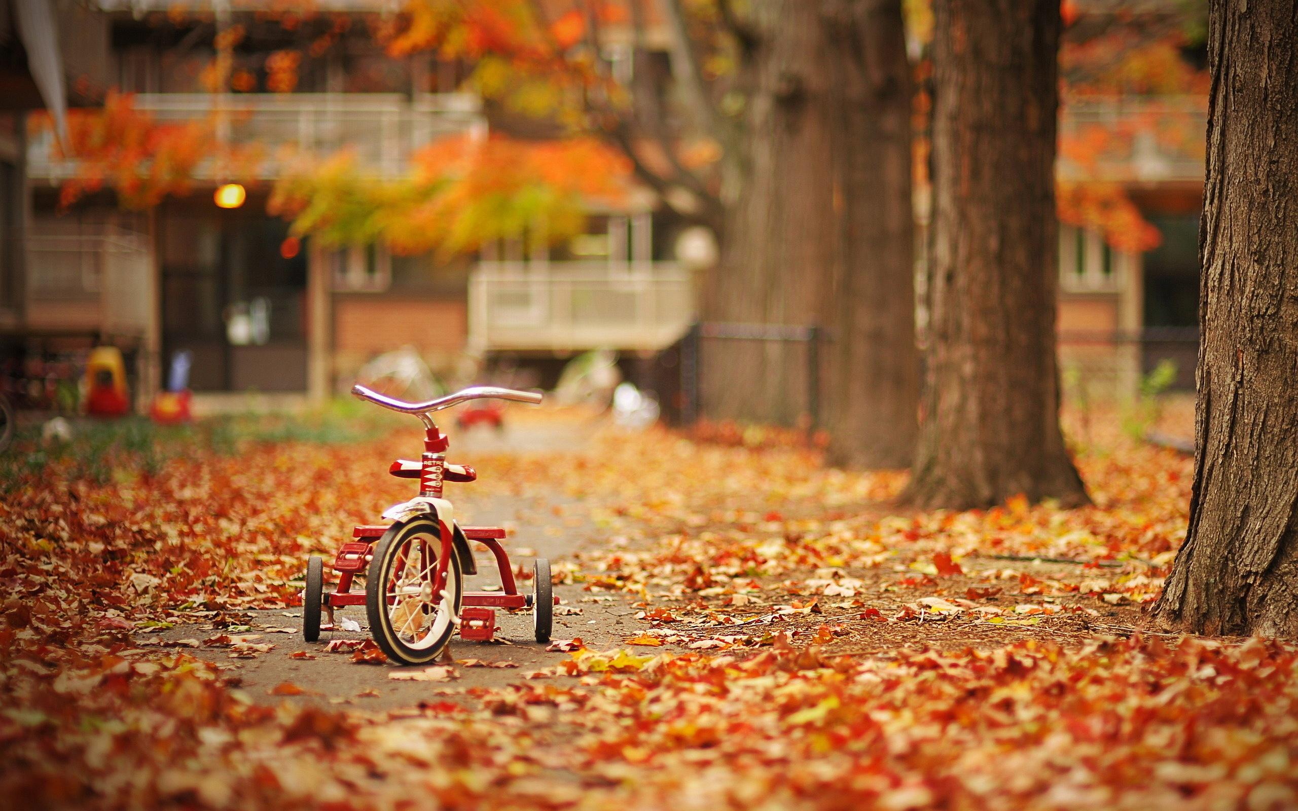 autumn wallpaper for desktop