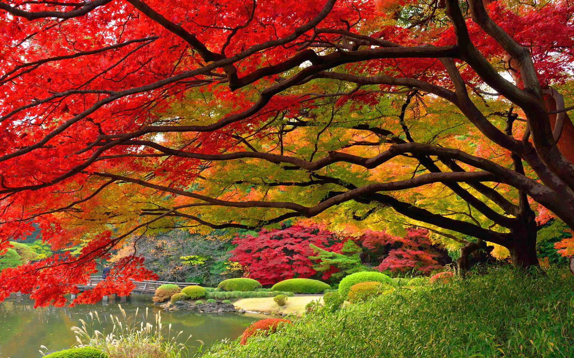 Autumn wallpaper japan hd hd desktop wallpapers 4k hd for Japanese garden colors