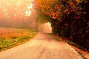 autumn wallpaper morning