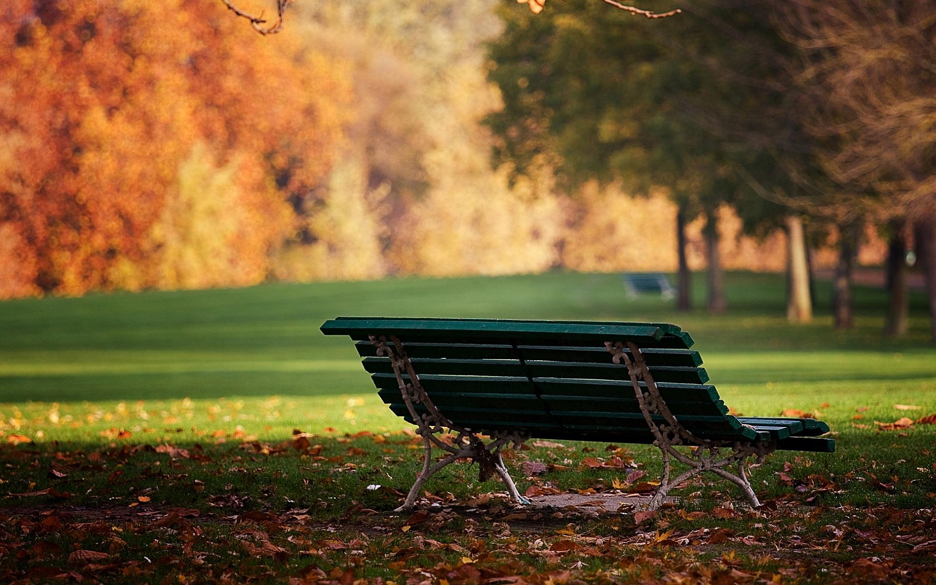 autumn wallpaper park