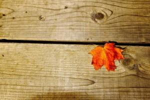 autumn wallpaper photography hd