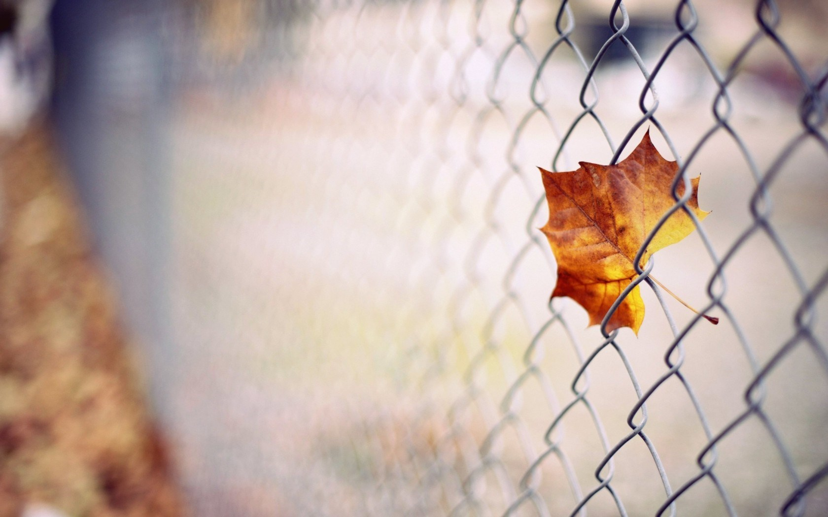 autumn wallpaper photography