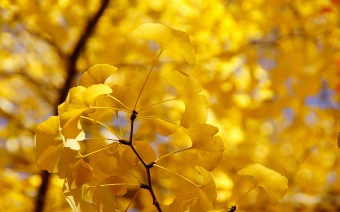autumn yelloq twig