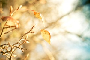 autumn yellow branch