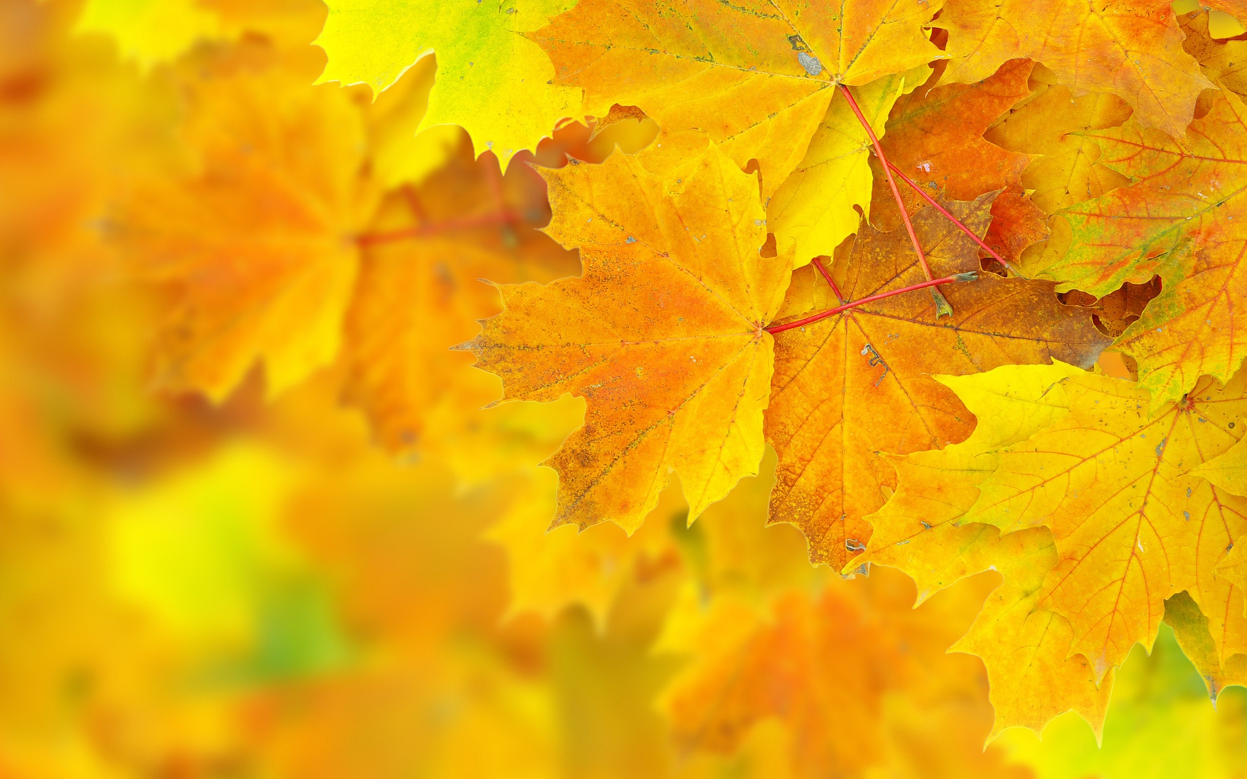 autumn yellow pictures