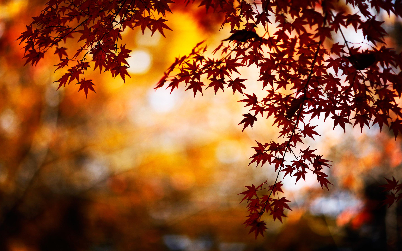 autumn aa