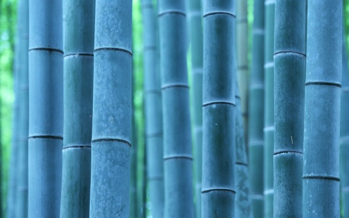 bamboo A3