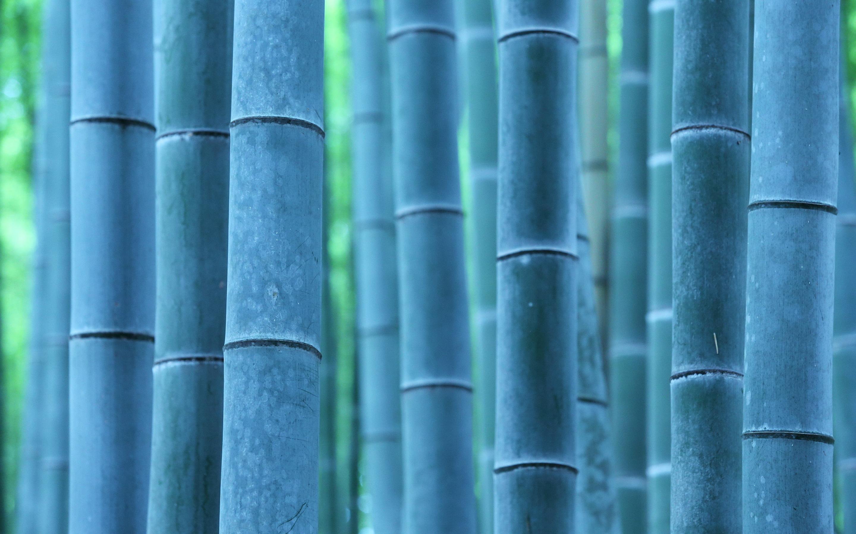 bamboo A3