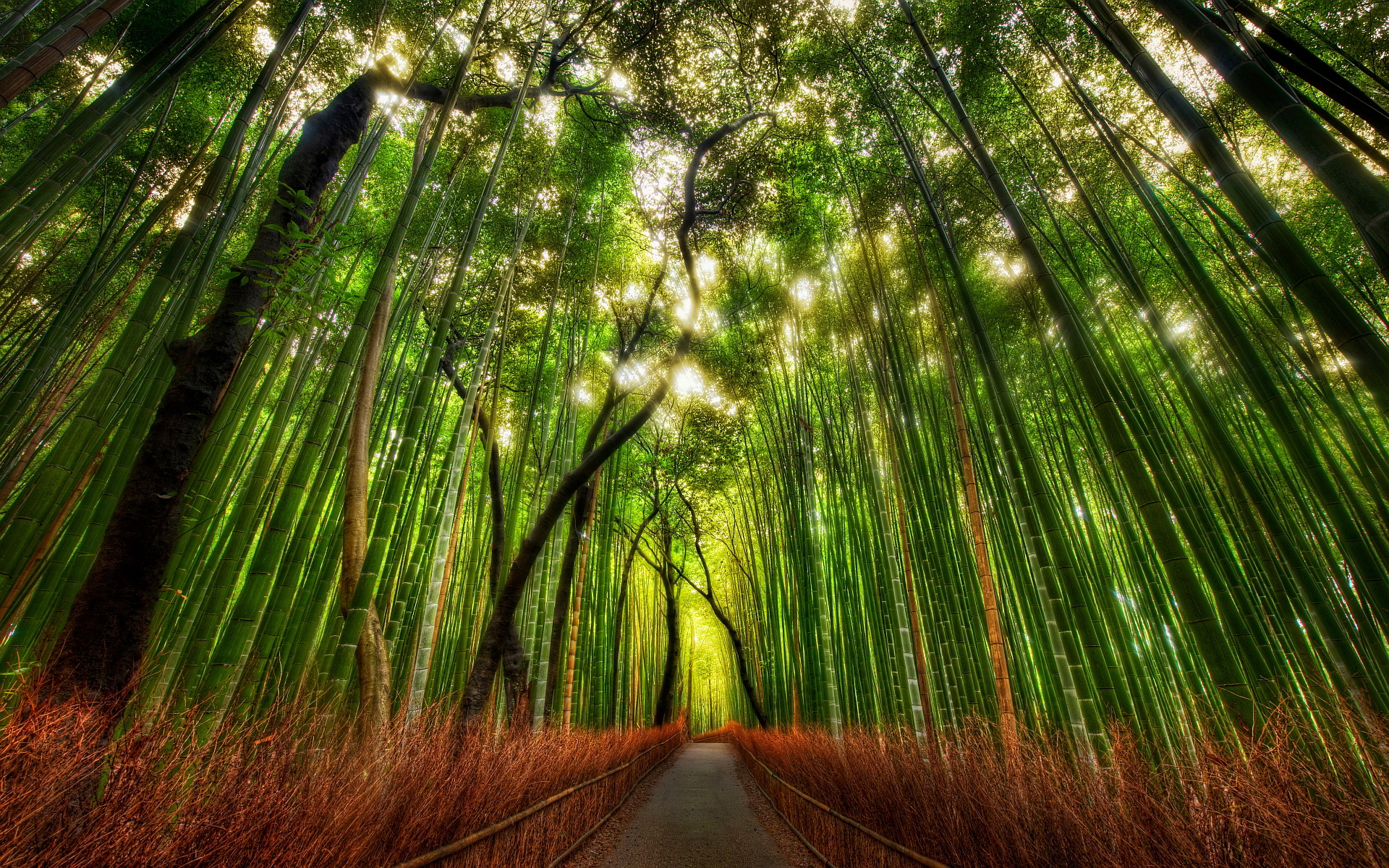 Bamboo Forest Hd Desktop Wallpapers 4k Hd