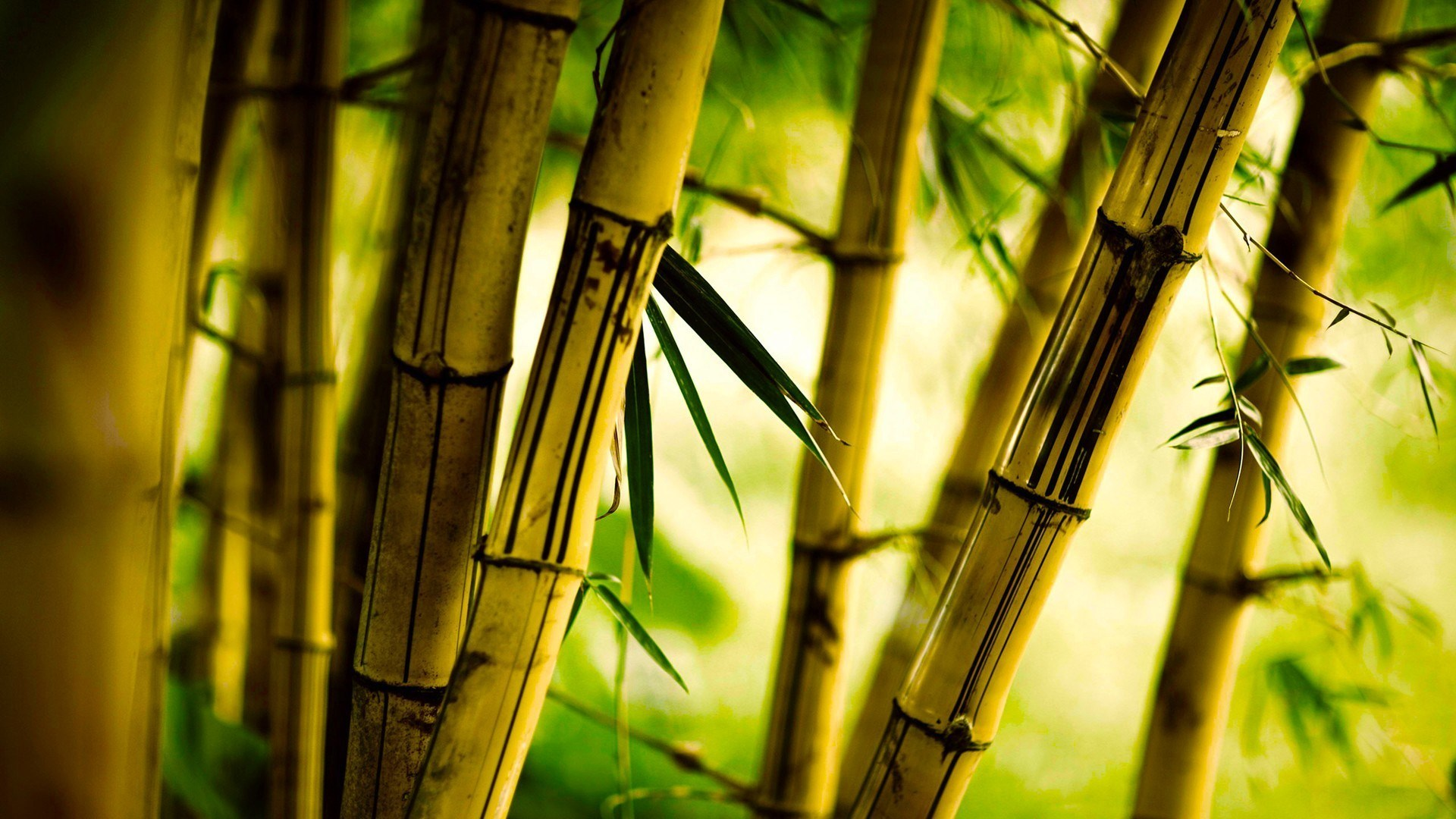bamboo nature bokeh