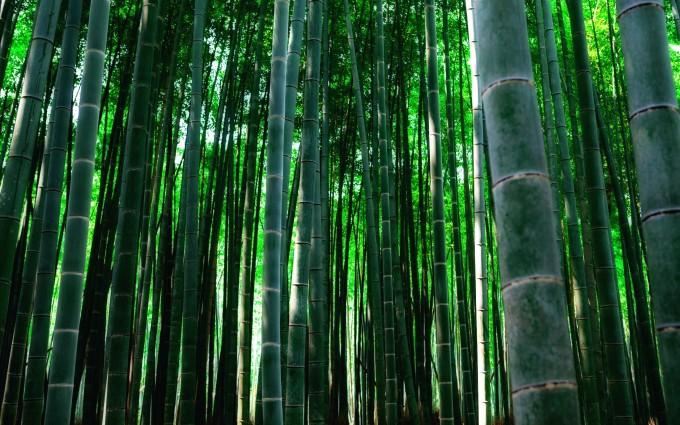 bamboos backgound