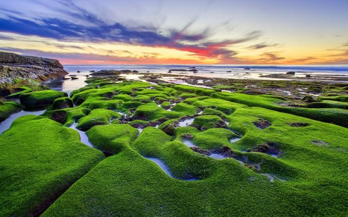 beach green nature