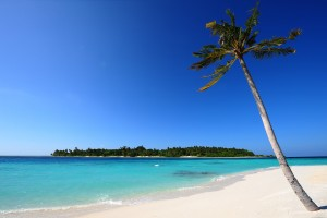 beach palm white sand