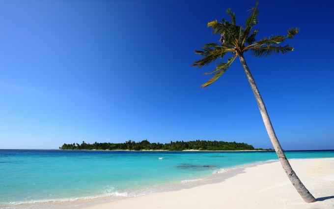 beach palm white sand
