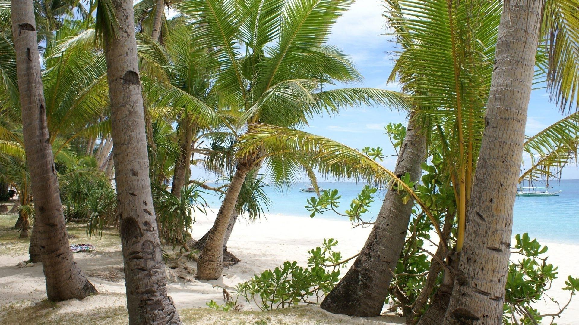 beach palms sand trees