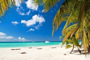 beach palms ships