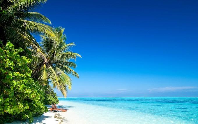 beach plam island