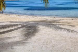 beach sand tree hd