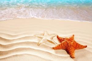 beach sea starfish