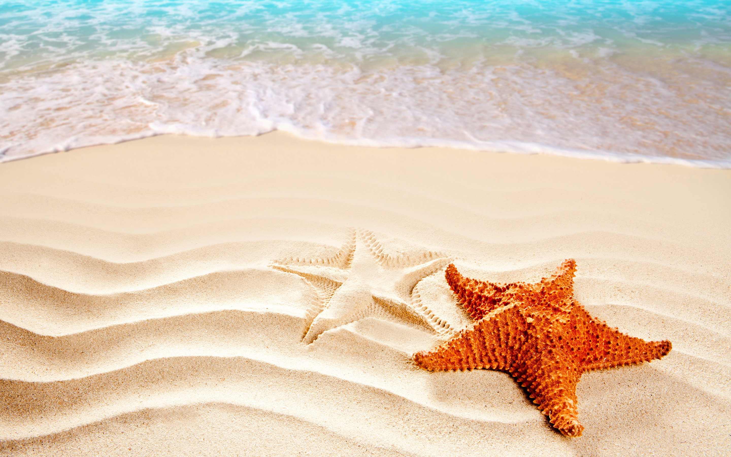beach sea starfish