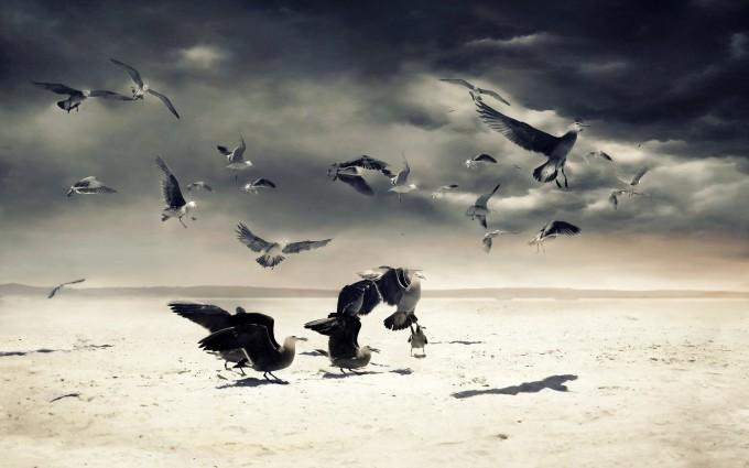 beach seagulls birds