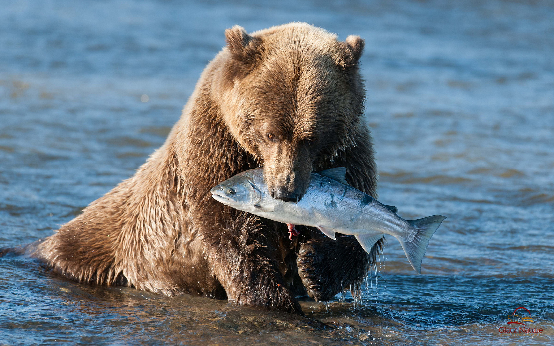 bear hunting fish