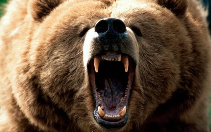 bear scary wallpaper
