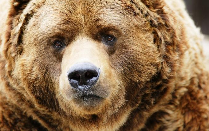 bear wild