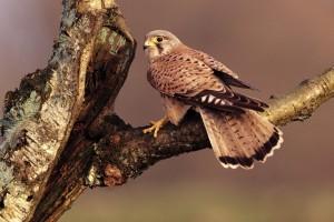 beautiful bird hunting
