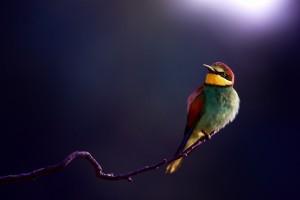 beautiful bird images