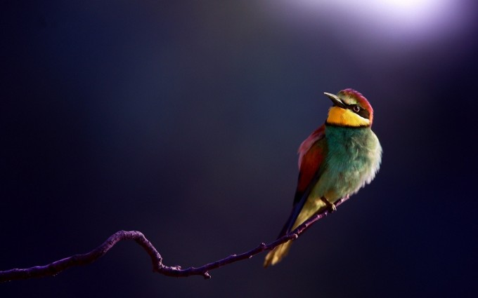 beautiful bird images