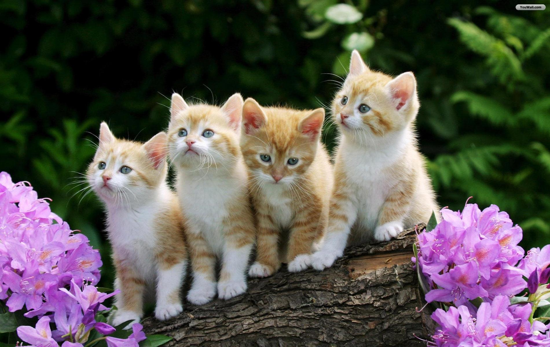 beautiful cute cats