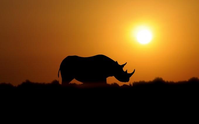 beautiful sunset wallpaper animal