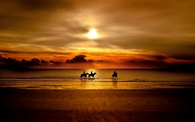 beautiful sunset wallpaper horse