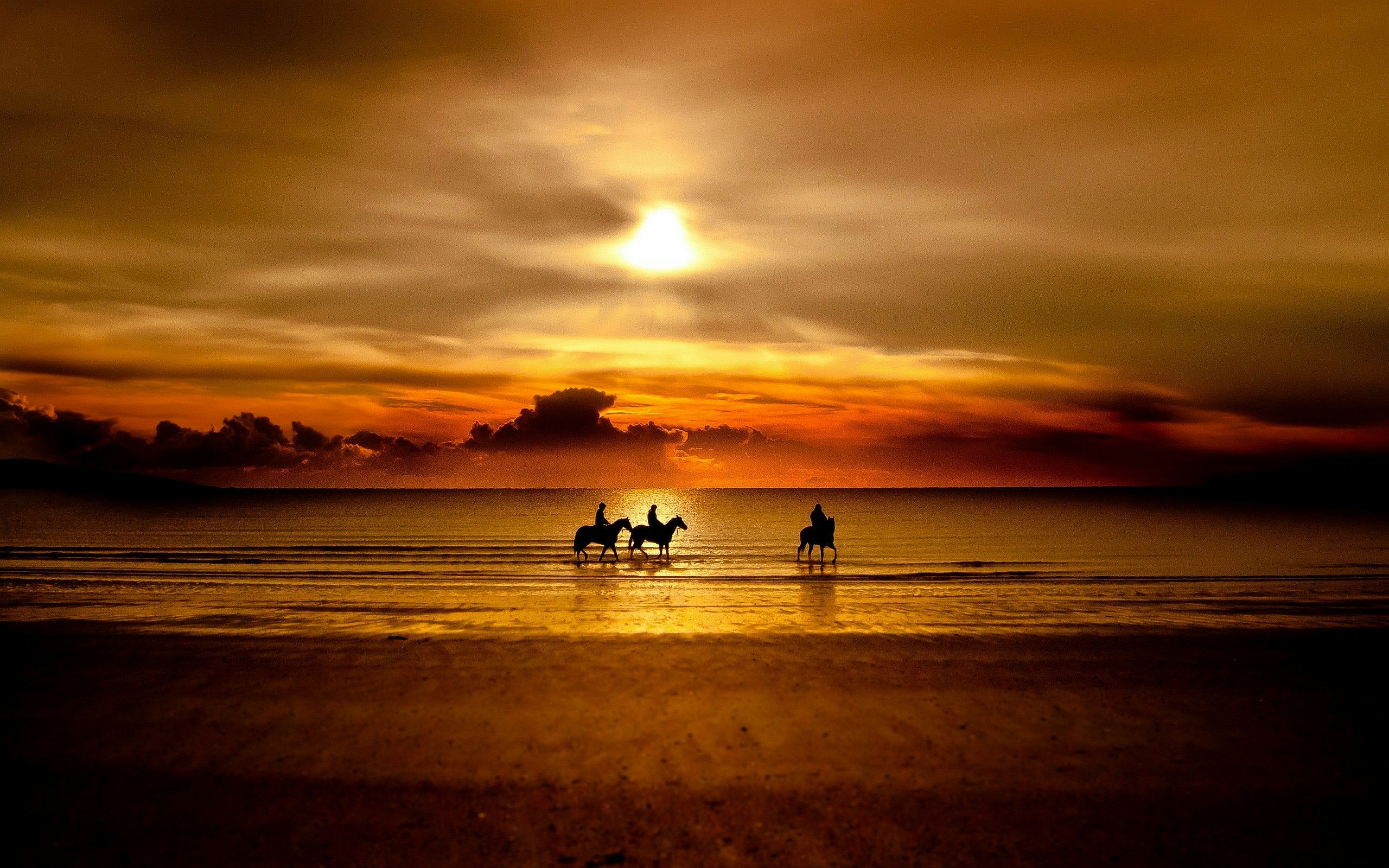 beautiful sunset wallpaper horse