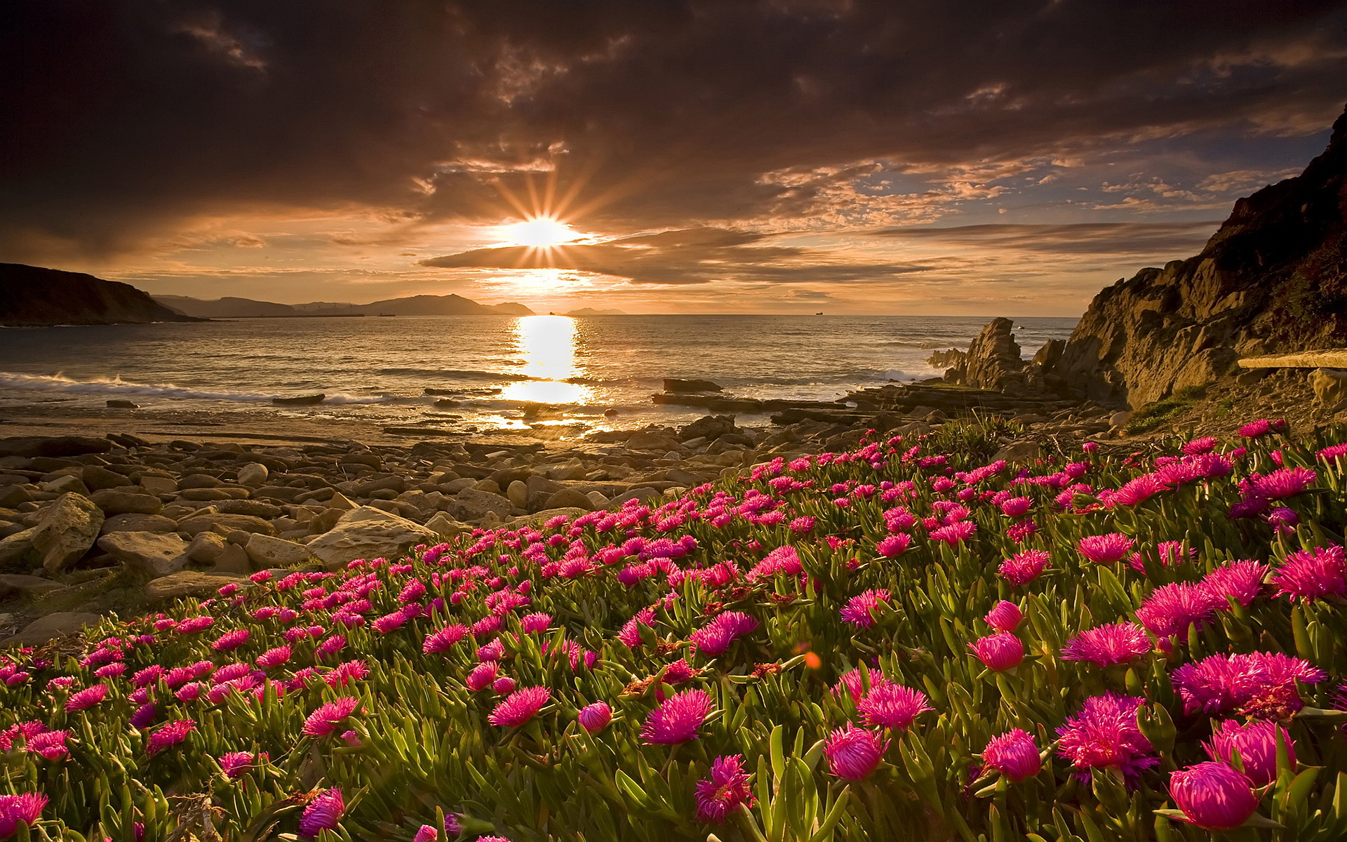 beautiful sunset wallpapers flowers