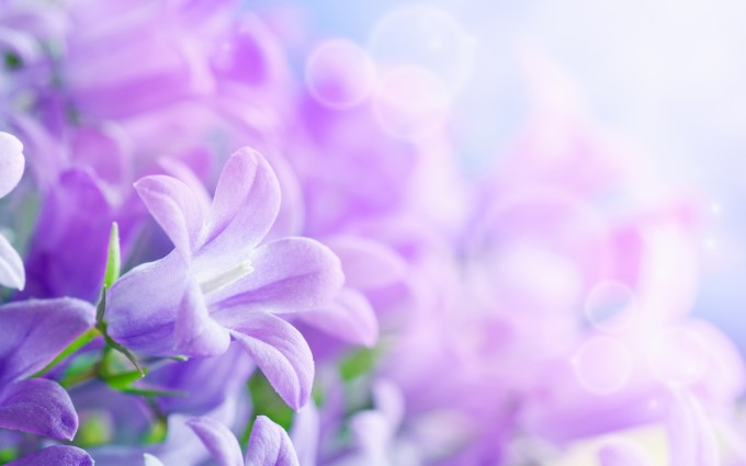 beautiful wallpaper purple flower