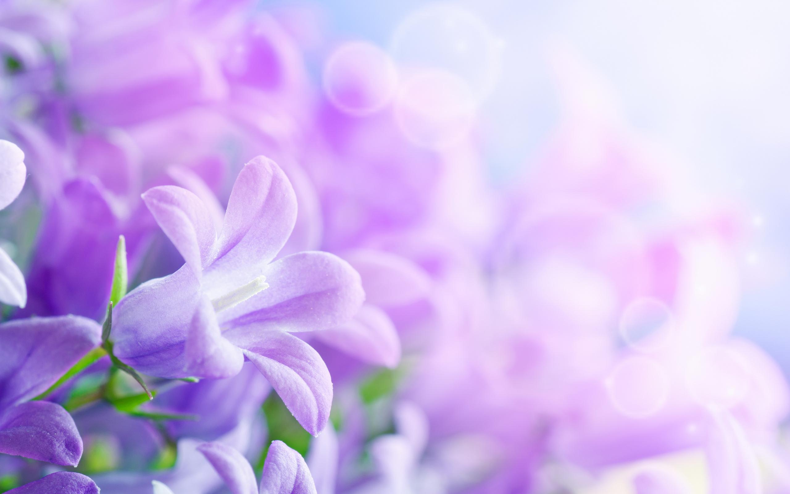 beautiful wallpaper purple flower