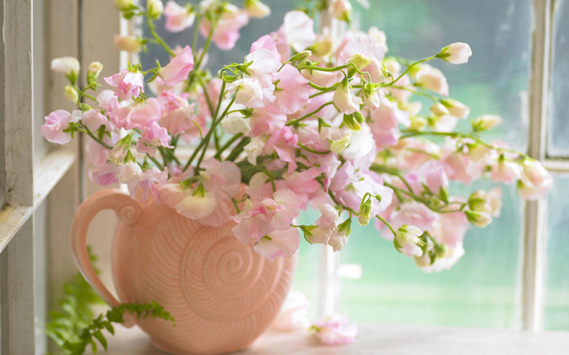 beautiful wallpaper rose
