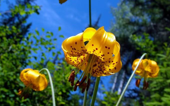 beautiful wallpaper yellow flower