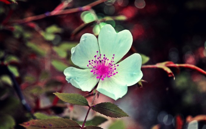 beautiful white pink flower