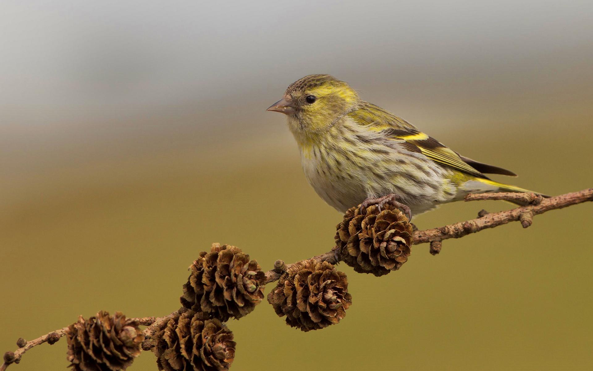 bird backgrounds