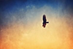 bird in sky images