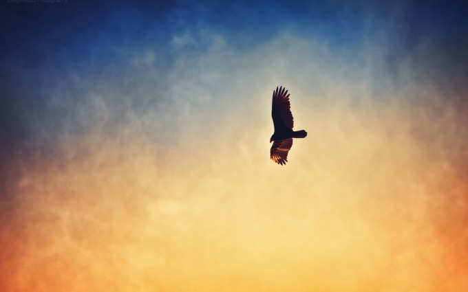 bird in sky images