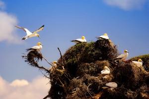 bird nests cool
