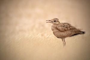 bird pictures stunning