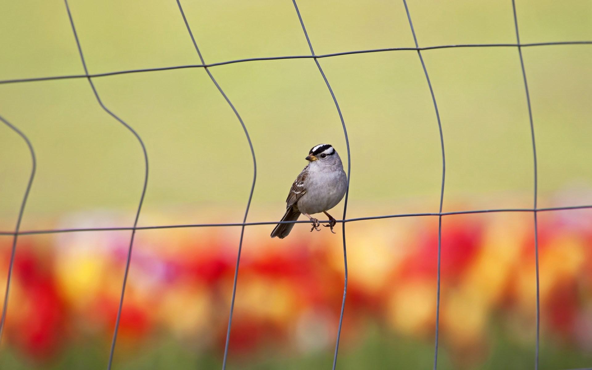 bird smart