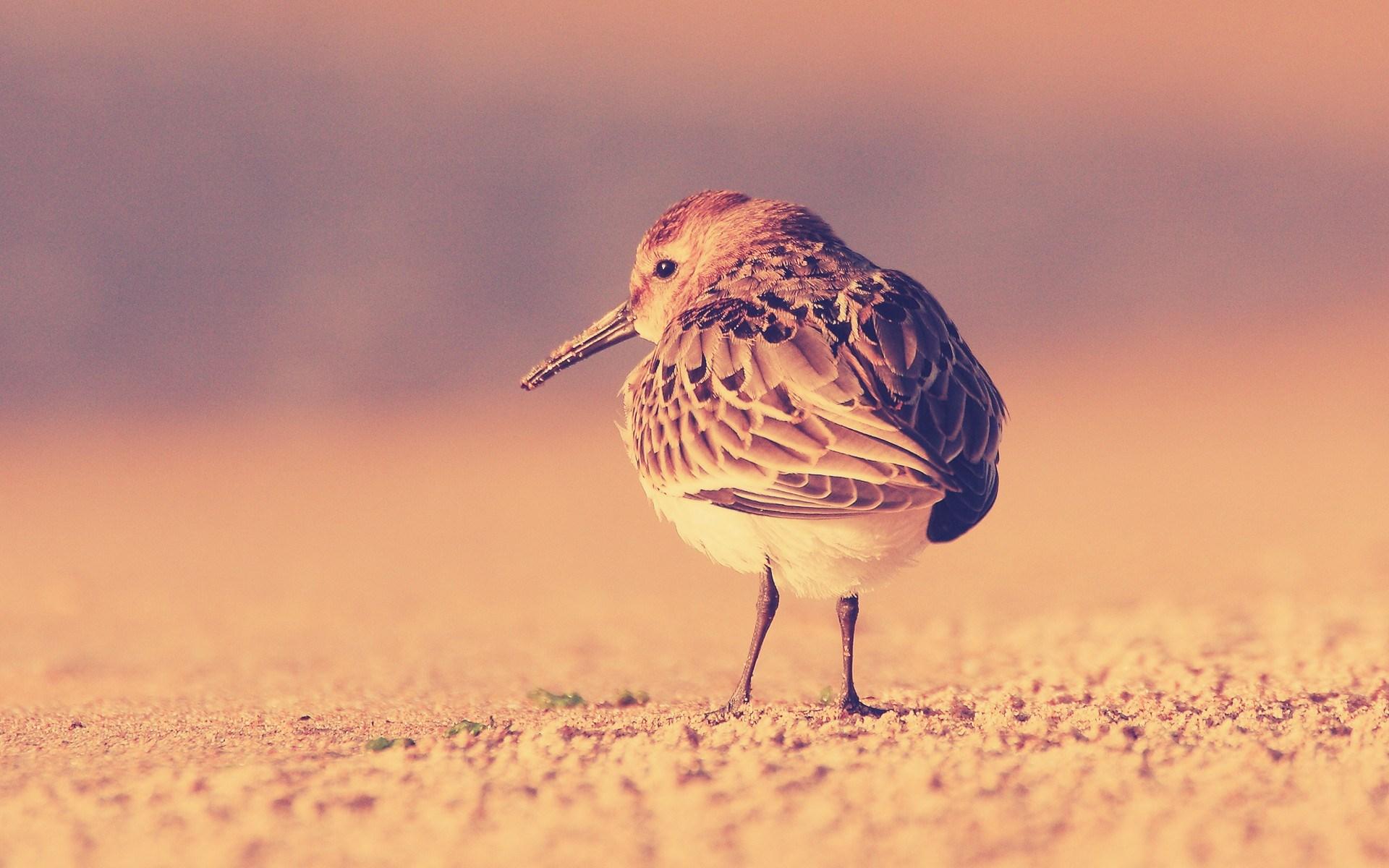 Bird Wallpaper Download - HD Desktop Wallpapers
